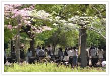 都立公園や庭園、水上バスなどの情報サイト「公園へ行こう!」の特徴をお聞かせ下さい。